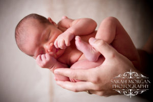 Savannah's newborn portrait